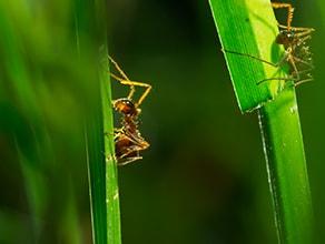 How we filmed in grasslands | BBC Earth